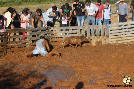 Apanha do Leitão 2014 - Freguesia de Enxames