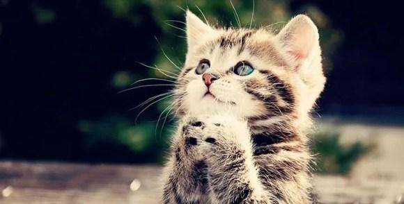Tatlı kedi - Şirin Kapak Fotoğrafları - Sevimli Ve Tatlı Kapak Resimleri, komik-sozler, guzel-sozler