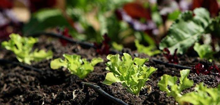 Δημιουργία βιολογικού αγροκτήματος στα Πευκάκια