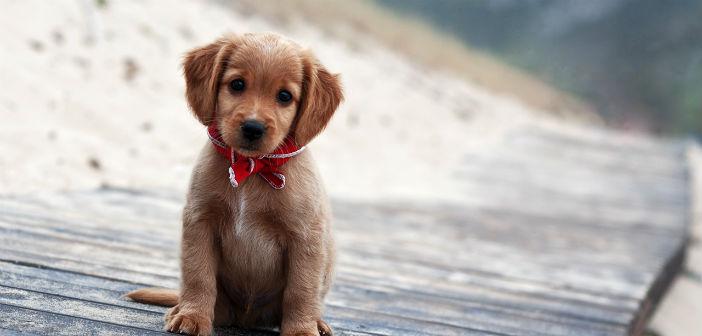Puppy Day στον Δήμο Κηφισιάς