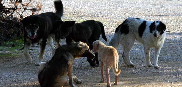 Ο Δήμος Μεταμόρφωσης προνοεί για τα αδέσποτα ζώα εν μέσω νέου κορωνοϊού