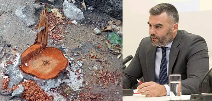 Δ. Αποστολάκος: Μόνο ντροπή προκαλούν οι αποφάσεις για ανεξέλεγκτες κοπές δένδρων στον Δήμο Πεντέλης