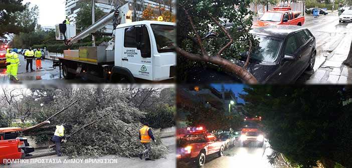 Πτώση επτά δένδρων στα Βριλήσσια μέσα σε ένα πεντάωρο!