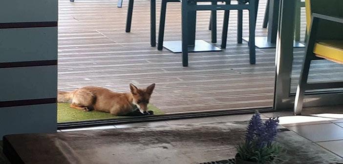 Τι γυρεύουν τα αλεπουδάκια στον όμιλο τένις του Παπάγου;