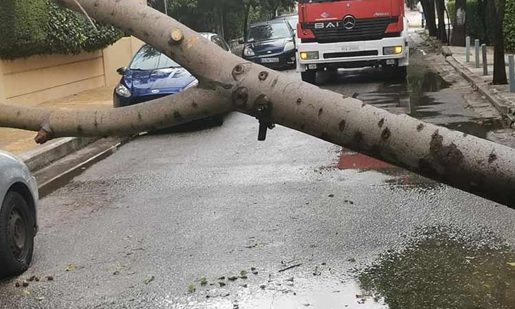 Δένδρο έπεσε πάνω σε Ι.Χ. στα Βριλήσσια