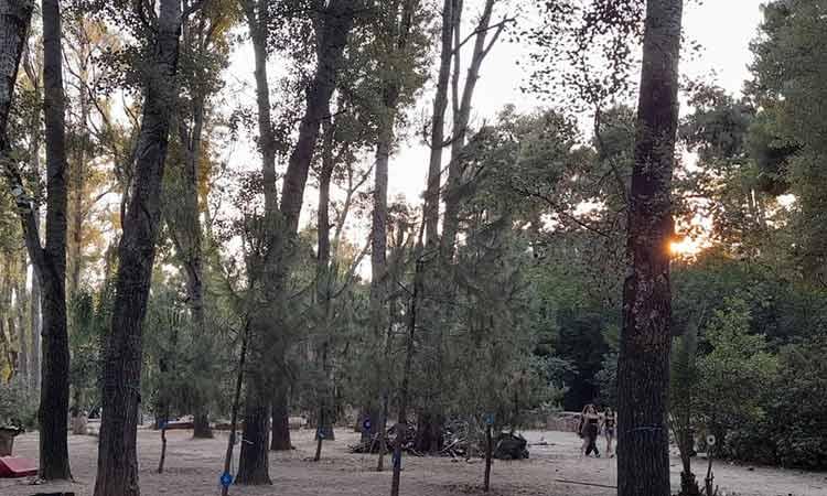 «Όχι» στην αυθαίρετη καταστροφή δένδρων – Νέος κανονισμός πρασίνου στο Χαλάνδρι