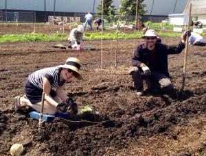 leek planting