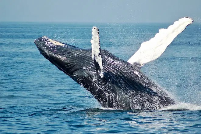 Adventure holiday in Canada, Whale watching
