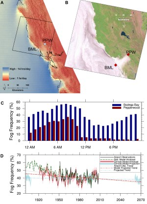 Fig. 2. Fog frequency along a coastal (Bodega Marine Laboratory (BML)) to inland (Pepperwood Preserve (PPW)) transect. (a) A fog frequency map derived from roughly 30,000 hourly Geostationary Operational Environmental Satellite (GOES) day and night images [Combs et al., 2010] displaying average daily hours of fog/low cloud cover (June–September 1999–2009) ranging from 1 to 14 hours per day. Crosshairs indicate locations of surface visibility stations referenced in Figure 2(c). (b) High-resolution view of low cloud patterns in the San Francisco Bay area from a 12 June 2002 Landsat image. (c) Diurnal patterns of fog observed in 2012 from surface visibility stations located at the coastal Bodega Marine Laboratory and at Pepperwood Preserve approximately 50 kilometers inland. Surface fog at the coastal site exhibits a diurnal pattern very similar to marine stratocumulus, whereas the inland site tends to exhibit complete fog dissipation by 11:00 a.m. Pacific Daylight Time. (d) Observed [Johnstone and Dawson, 2010] and simulated [O'Brien, 2011] centennial-scale variations in Northern California fog frequency. The model hindcast utilized boundary conditions derived from the U.S. National Oceanic and Atmospheric Administration's 20th century reanalysis, whereas model projections were based on the business-as-usual scenario from Intergovernmental Panel on Climate Change's Fourth Assessment Report.