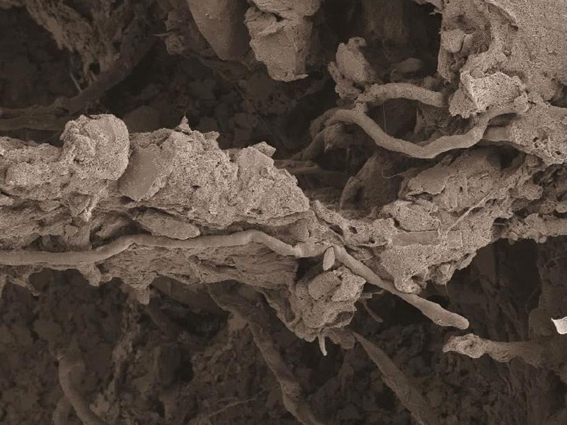 fungus-iron-magnesium