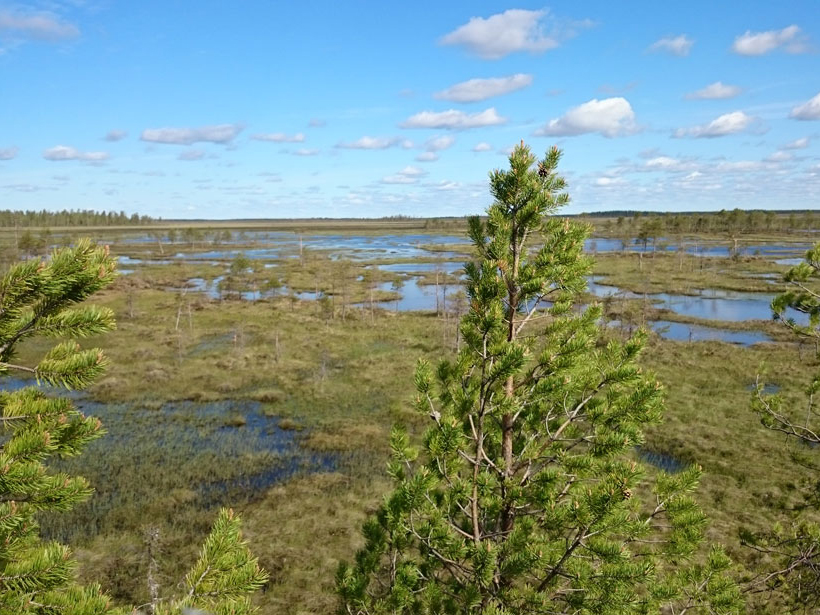 New measurements help researchers assess methane emitted by wetlands