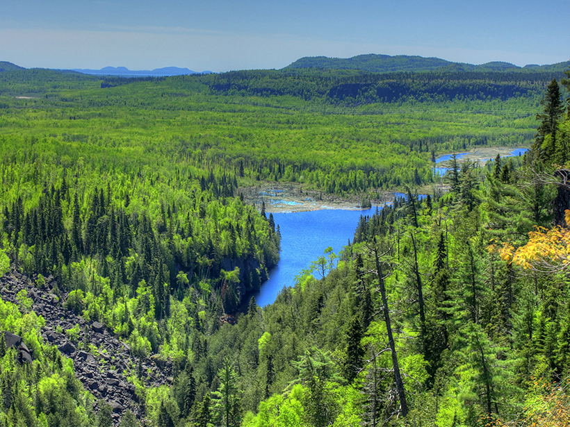 Researchers assess whether Canada's boreal forests are a carbon sink or source