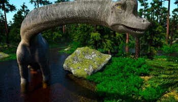 A computer rendering of a Brachiosaurus. Herbivores like brachiosaurs likely helped distribute nutrients through their poop.