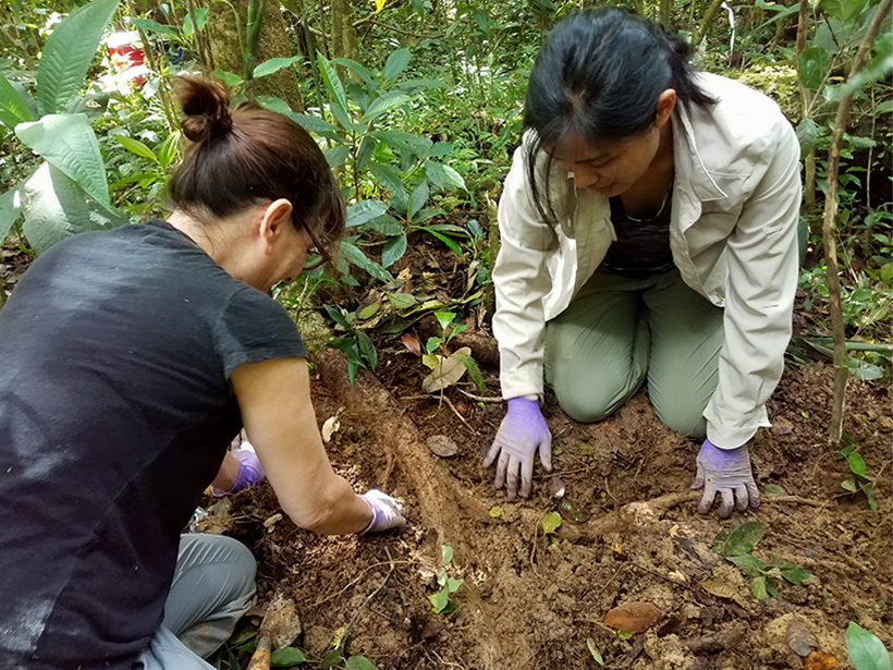 Researchers study a tree's roots
