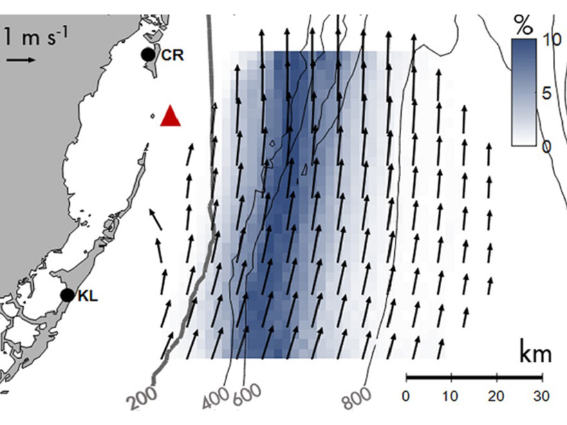 Western boundary current off Florida