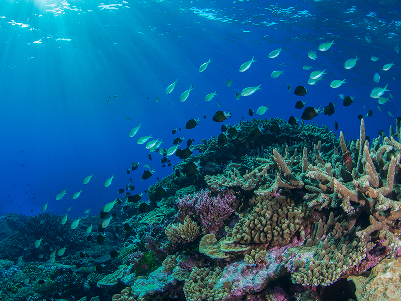 A school of fish swims in the Coral Sea.