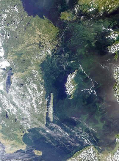 Satellite image of algae blooming on the surface of the Baltic Sea on 3 August 2011.