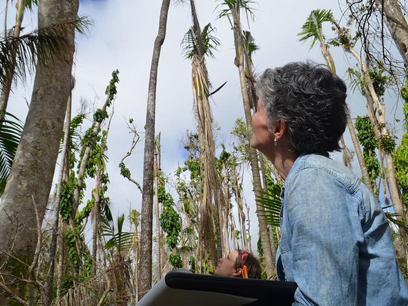 Ecologist Maria Uriarte of Columbia University records damage that Hurricane Maria did to trees in Puerto Rico
