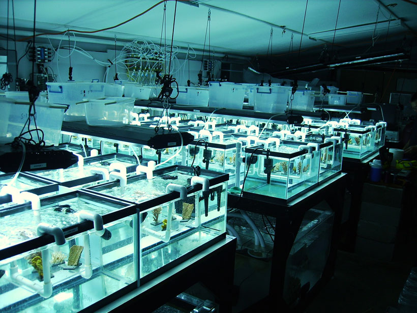 coral climate change research