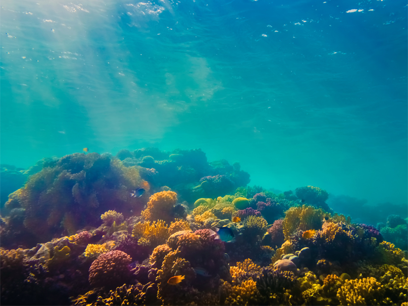 Close-up photo of a colorful coral reef