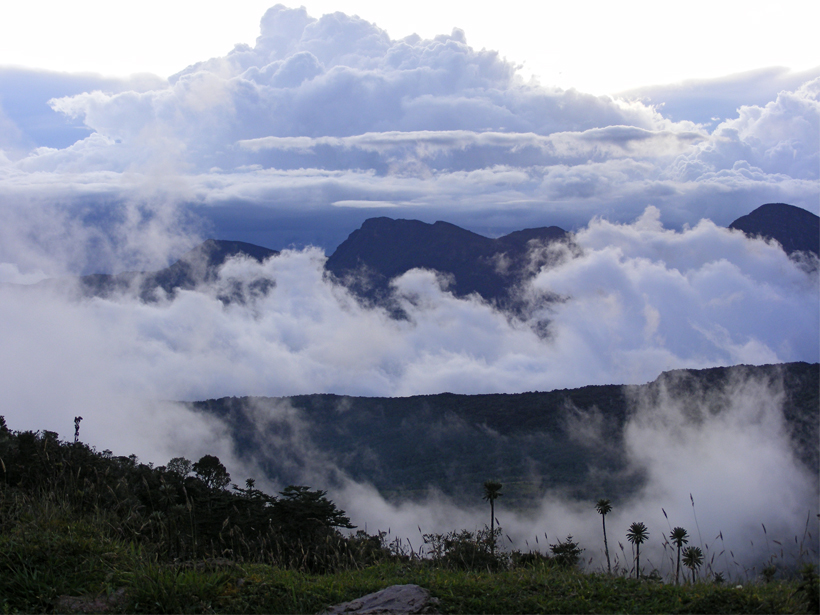 A photograph of an Andean páramo that is awash in clouds.