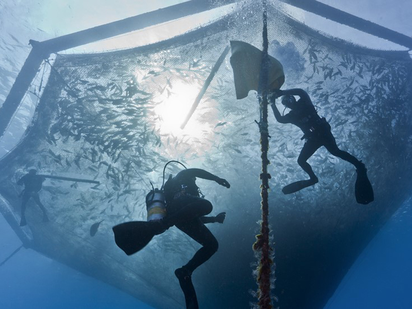 Sustainable marine aquaculture