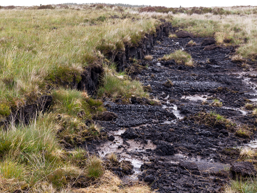 Grassy bog with a strip of exposed, muddy peat