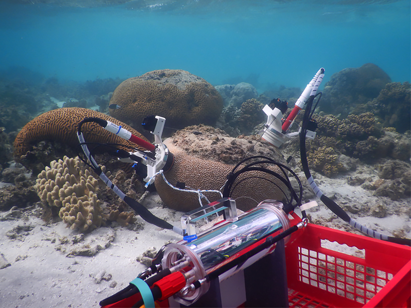 CISME devices attached to living coral and a community of turf algae growing on dead coral