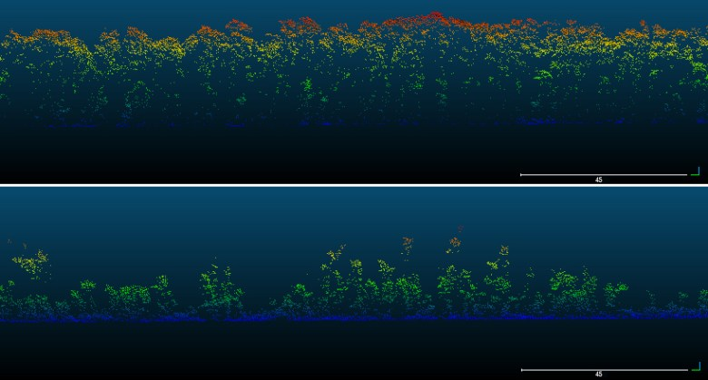Two panels with a black background and rainbow-colored dots showing the heights of mangrove trees before and after Hurricane Maria