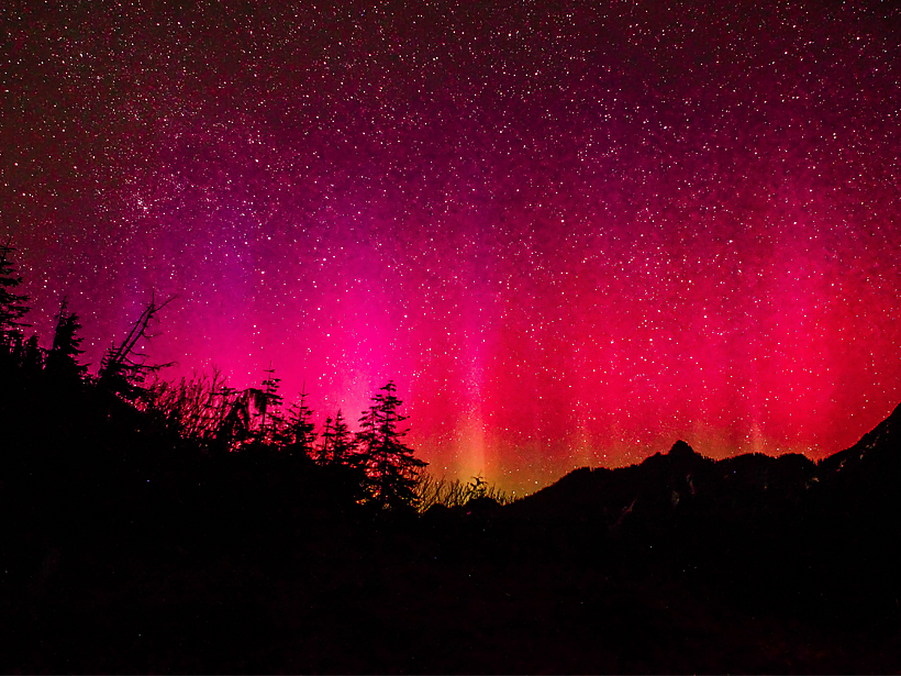 A purple and red curtain aurora provides a backdrop to the silhouette of a forest.