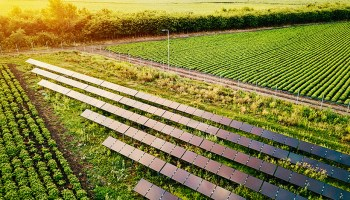 Rows of solar panels sit amid crops on a farm.