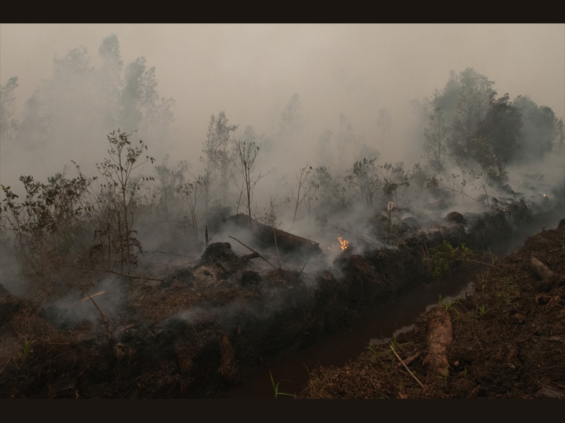 Smoldering peat fire emits a hazy smoke over a tropical forest