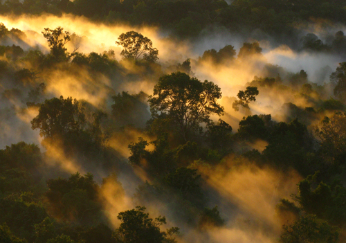 Mist mingles with the canopy of the Amazon forest in Brazil