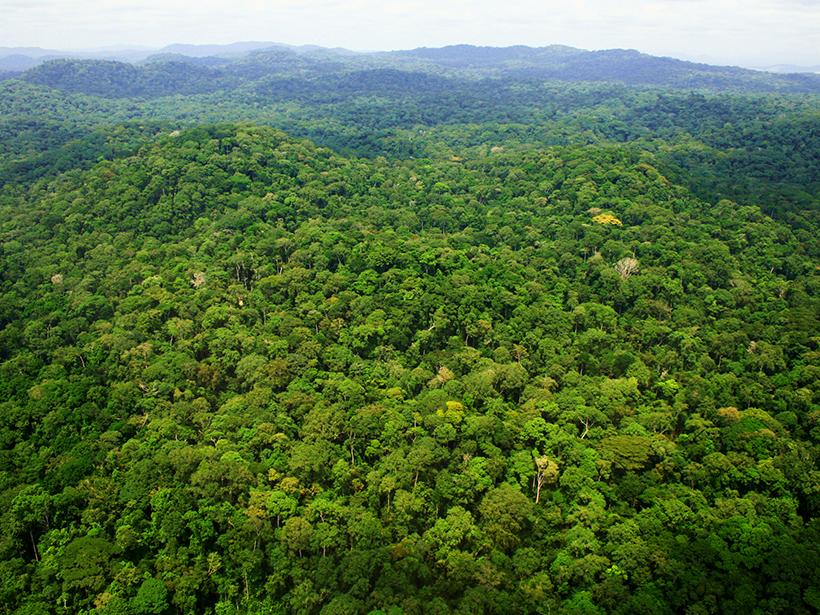 Forest in Ivindo National Park in Gabon