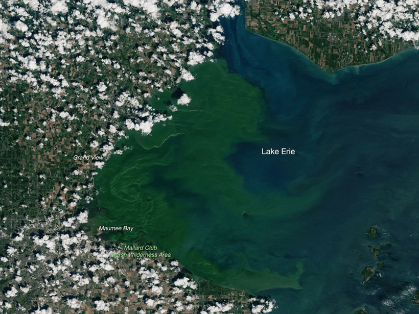 Satellite image of Lake Erie with a bright green algal bloom