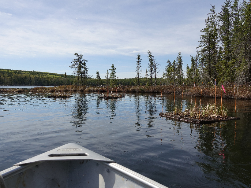 Tip of a small boat leads into the placid near shore of a forested lake.