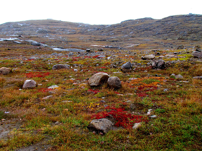A rocky landscape with short vegetation in the Canadian tundra