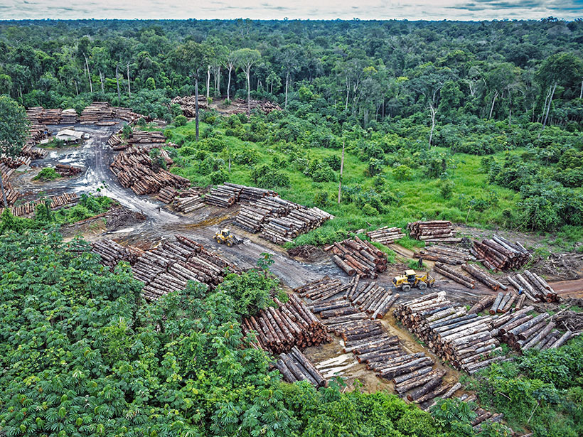 Numerous piles of logs lie stacked in a tract cleared amid lush forest.