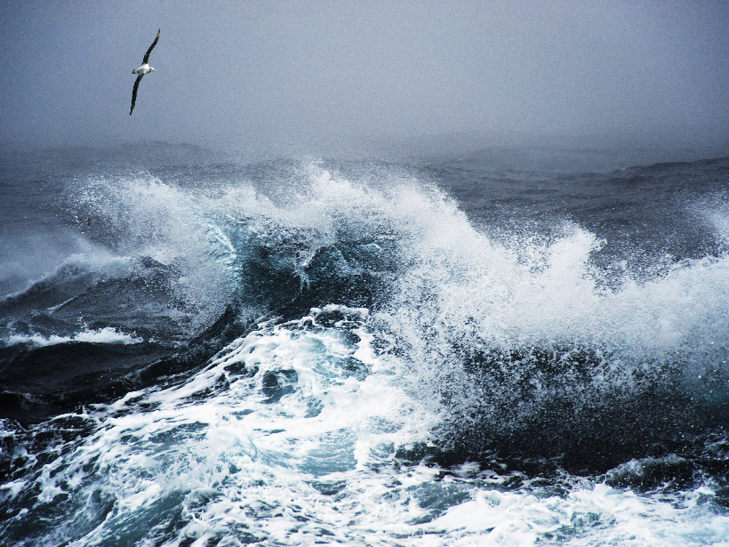 Seabird soars over a very stormy Southern Ocean