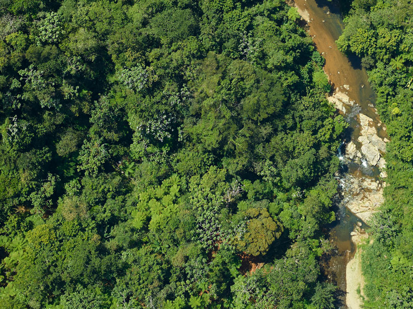 Aerial view of treetops, vegetation, and a stream in Puerto Rico