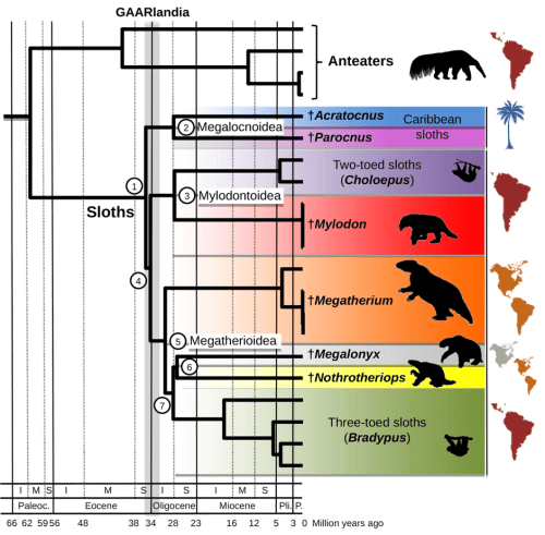 Time-calibrated phylogeny of modern and extinct sloths based on complete mitogenomes