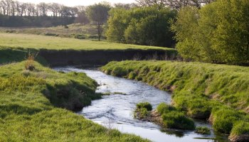 Stream surrounded by grassland.