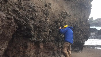 A researcher looks closely at a rocky cliff near the shoreline on Saint Helena.