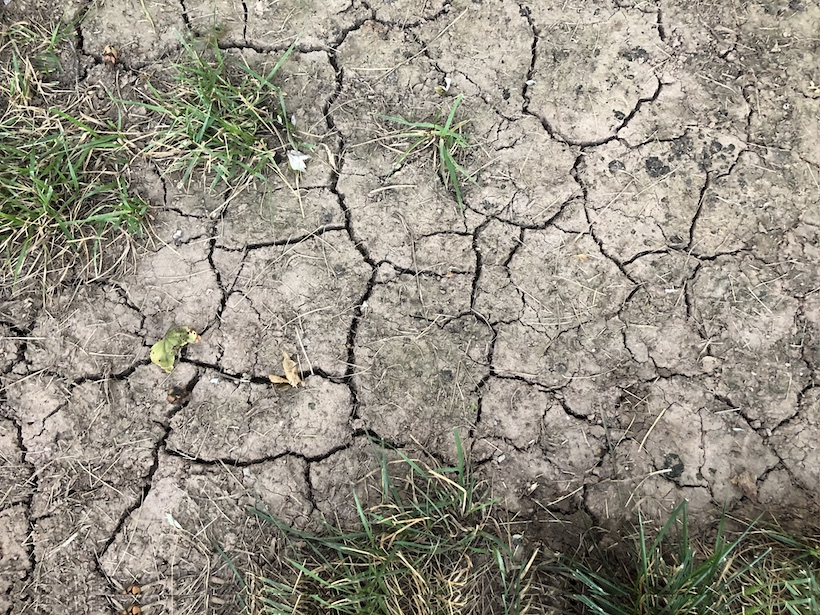Close-up of cracked earth and sparse grasses