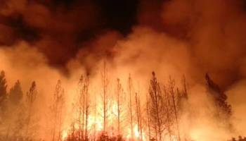 Flames and billowing smoke rise from trees at night.