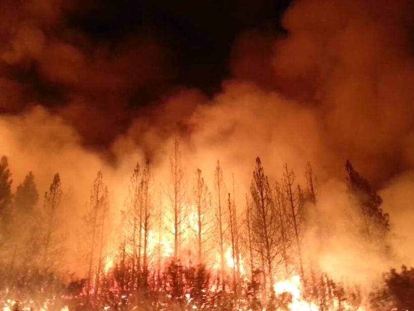 夜晚,火焰和滚滚浓烟从树上升起。