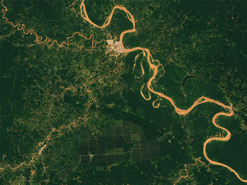 A satellite image of a tropical forest.