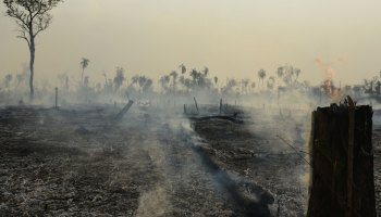 Smoke rises from the ground and the charred stumps of trees, collecting in a yellow-brown haze in the sky, after a fire burned through the Amazon rain forest