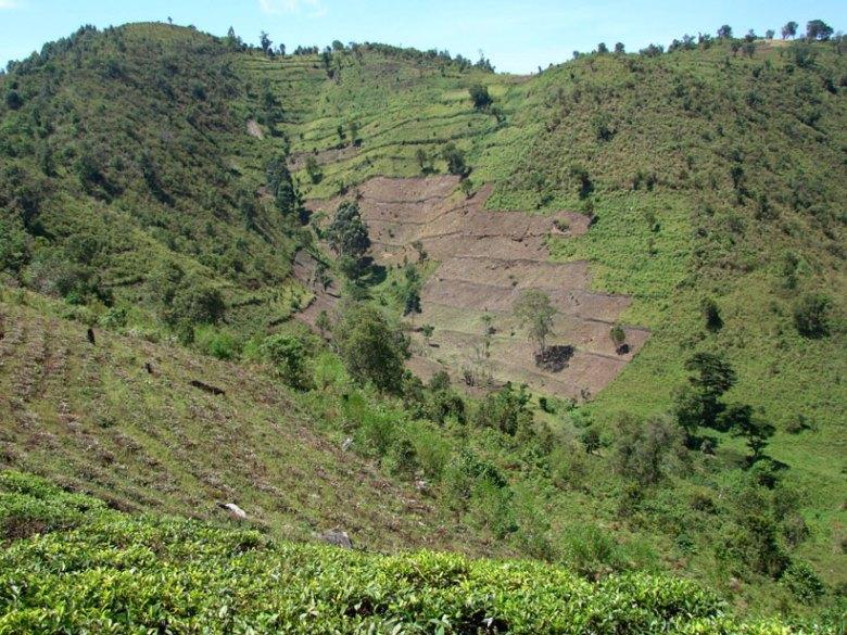 Terraced hillsides in Uganda