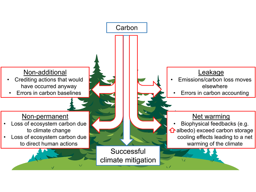 Figure showing key requirements for making forest-based natural climate solutions successful for climate mitigation, with examples of potential pitfalls are shown for each category.